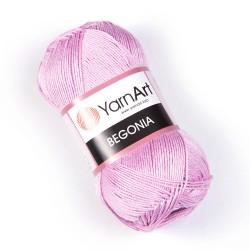 Begonia 5049
